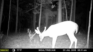 2015_REVIEWSAMPLE_MOULTRIE_M-880-Gen2_0146