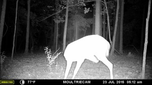 2015_REVIEWSAMPLE_MOULTRIE_M-880-Gen2_0152