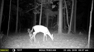 2015_REVIEWSAMPLE_MOULTRIE_M-880-Gen2_0160