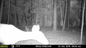 2015_REVIEWSAMPLE_MOULTRIE_M-880-Gen2_0163