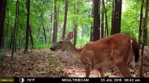 2015_REVIEWSAMPLE_MOULTRIE_M-880-Gen2_0168
