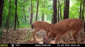 2015_REVIEWSAMPLE_MOULTRIE_M-880-Gen2_0175