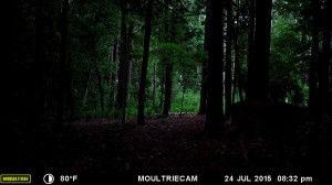 2015_REVIEWSAMPLE_MOULTRIE_M-880-Gen2_0278