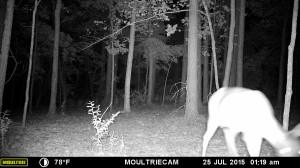 2015_REVIEWSAMPLE_MOULTRIE_M-880-Gen2_0281