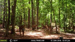 2015_REVIEWMEDIA_MOULTRIE_M-880i_0002 (1)