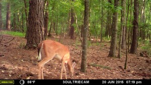2015_REVIEWSAMPLE_MOULTRIE_M-880i-Gen2_0013