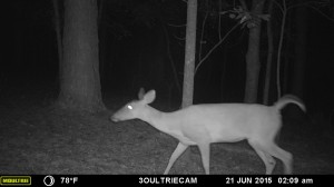 2015_REVIEWSAMPLE_MOULTRIE_M-880i-Gen2_0017