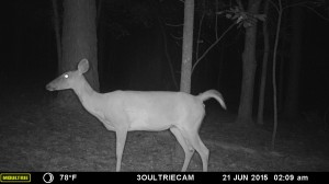 2015_REVIEWSAMPLE_MOULTRIE_M-880i-Gen2_0018