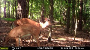 2015_REVIEWSAMPLE_MOULTRIE_M-880i-Gen2_0039