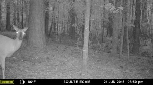 2015_REVIEWSAMPLE_MOULTRIE_M-880i-Gen2_0049
