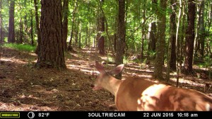 2015_REVIEWSAMPLE_MOULTRIE_M-880i-Gen2_0066