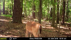 2015_REVIEWSAMPLE_MOULTRIE_M-880i-Gen2_0067