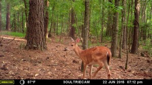 2015_REVIEWSAMPLE_MOULTRIE_M-880i-Gen2_0090