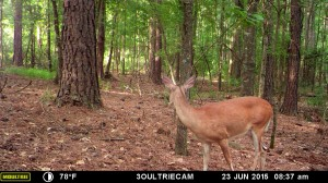 2015_REVIEWSAMPLE_MOULTRIE_M-880i-Gen2_0125