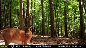 2015_REVIEWSAMPLE_MOULTRIE_M-990i-Gen2_0009