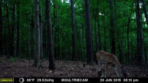 2015_REVIEWSAMPLE_MOULTRIE_M-990i-Gen2_0030