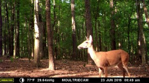 2015_REVIEWSAMPLE_MOULTRIE_M-990i-Gen2_0197
