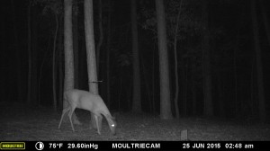 2015_REVIEWSAMPLE_MOULTRIE_M-990i-Gen2_0374