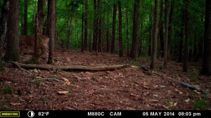 2014_REVIEWSAMPLE_MOULTRIE_M-880C_0036
