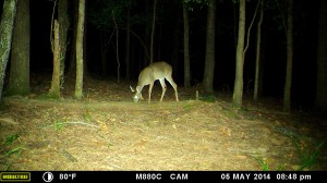 2014_REVIEWSAMPLE_MOULTRIE_M-880C_0037