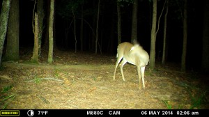 2014_REVIEWSAMPLE_MOULTRIE_M-880C_0040