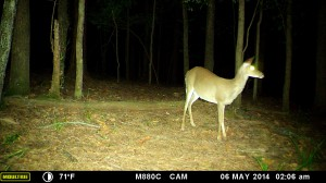 2014_REVIEWSAMPLE_MOULTRIE_M-880C_0041
