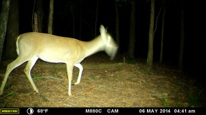 2014_REVIEWSAMPLE_MOULTRIE_M-880C_0042